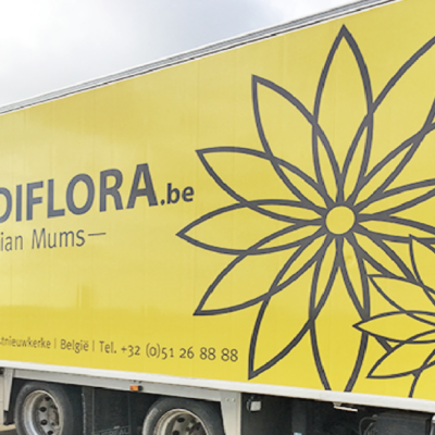 販売数世界一のマム専門種苗会社「GEDIFLORA」へ!
